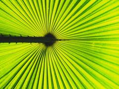 Botanical Gardens-120.jpg