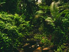 Botanical Gardens-170.jpg