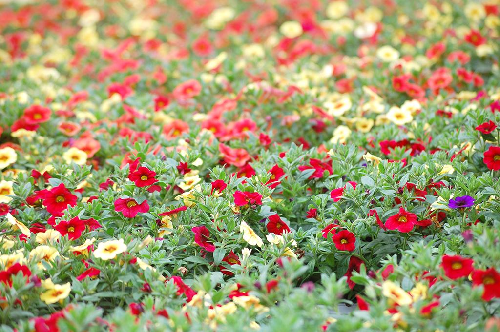 Wir lieben Blumen...