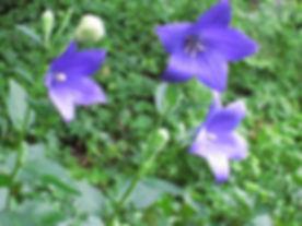 valoon flowers.jpg