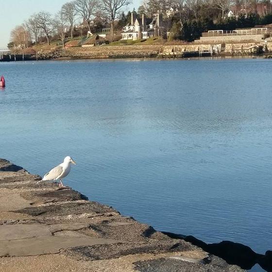 Sunday Morning Seagull