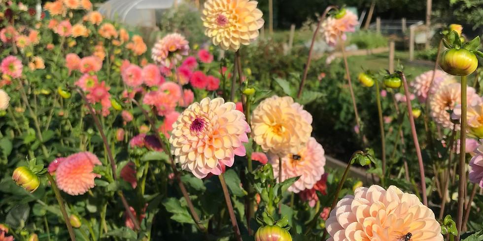 Rambling Summer Meadow Arch + Bridal Bouquets