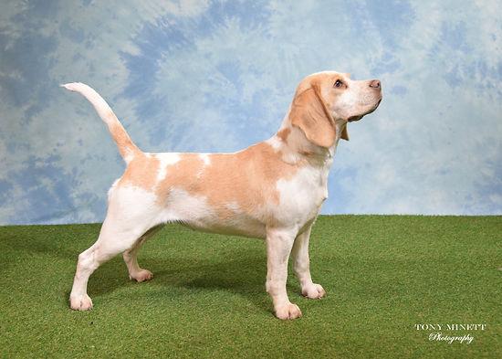 Lich Beagle.jpg