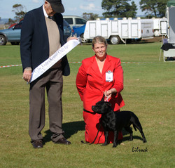Best of Breed & Aust Bred In Group