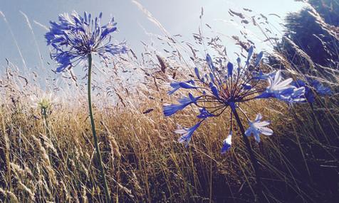 HT Flower.jpg