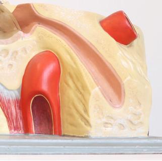 Anatomical ear model
