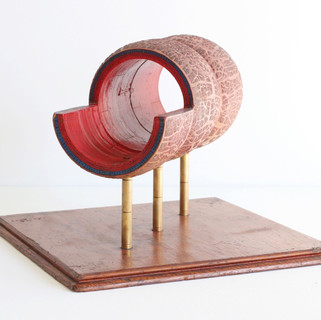 Scientific Earthworm model