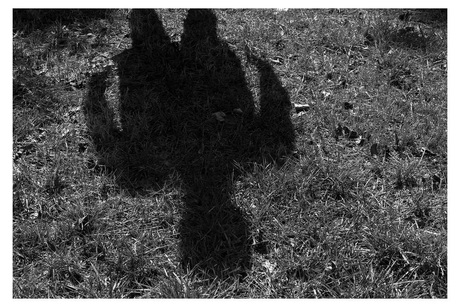 Lone Shadow