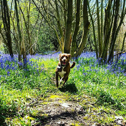 JUNIOR _#dogsofinstagram #dogsoftwitter #dogsoffacebook #Woof #k9love #dogs #mansbestfriend #gorgeou