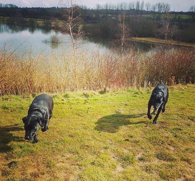 #poshpaws #dogsofinstagram #dogsoftwitter #dogsoffacebook #Woof #k9love #gorgeousgirlies #bffs #grea