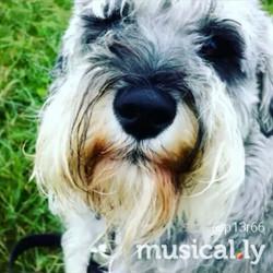POSH PAWS__#poshpaws #dogsofinstagram #dogsoftwitter #dogsoffacebook #k9love #lovethem #lovedogs