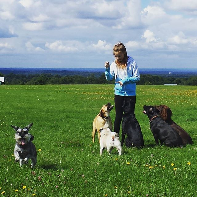 #gorgeousdogs #sit #lovethem  #havingfun #itsadogslife #surrey #instadog #lovedogs #dogwalker #doggy