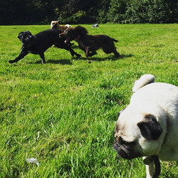 #dogwalk #instadog #instapup #gorgeousdogs #itsadogslife #crazydogwoman #dogwalker #doggydaycare #su