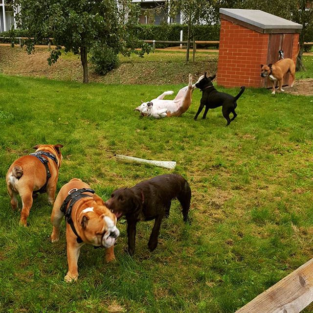 #watercolourredhill #dogwalker #doggydaycare #furbabies #surrey #havingfun #doggybestfriends #k9bff