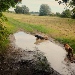 #dogwalk #instadog #instapup #dogmad #dogsofinstagram #doggie #dogmama #splash #puddles #itsadogslif