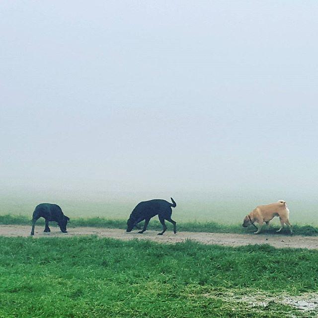 #dogs #mansbestfriend #foggy #dogwalk #dogsofinstagram #dogsoftwitter #dogsoffacebook #Woof #k9love