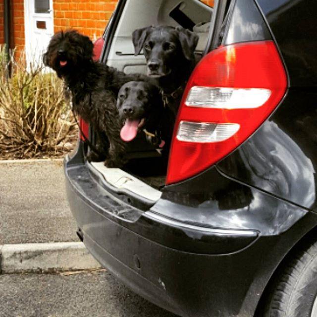 #dogs #mansbestfriend #dogsofinstagram #dogsoftwitter #dogsoffacebook #Woof #k9love #gorgeousgirlies
