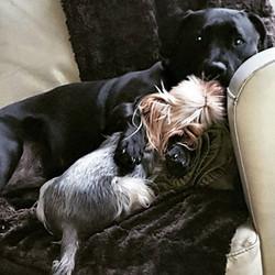 COOKIE AND SADIE__#kisses #cuddles #dogsofinstagram #dogsoftwitter #dogsoffacebook #Woof #k9love #go