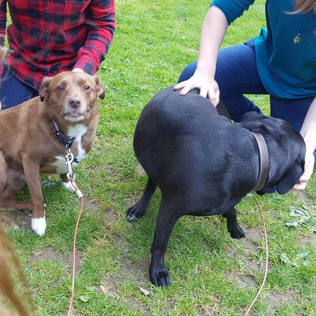 #dogsofinstagram #dogsoftwitter #dogsoffacebook #Woof #k9love #dogs #mansbestfriend #furbabies #itsa