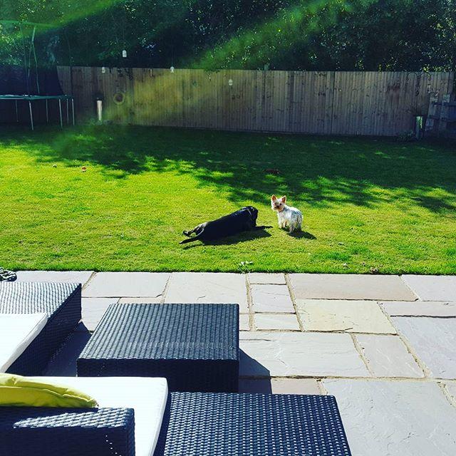 #dogs #mansbestfriend #lovinglife #dogsofinstagram #dogsoftwitter #dogsoffacebook #Woof #k9love
