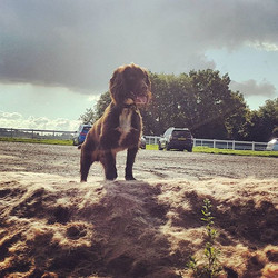 HENRY__#dogsofinstagram #dogsoftwitter #Woof #dogwalker #doggydaycare #furbabies #surrey #havingfun
