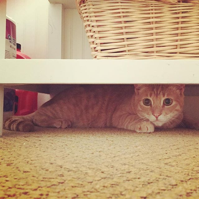 cat hiding under the sink