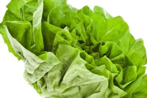 Webbs Lettuce