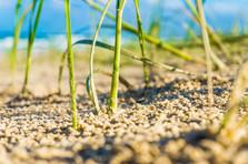 Grass beach 3.jpg