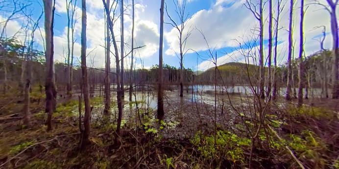Main Pic Springbrook Lake Tree.jpg