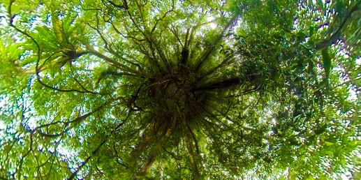 TINY PLANET Spring Brook Rainforest.jpg