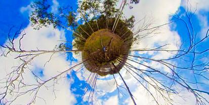 TINY PLANET Springbrook Lake Tree.jpg