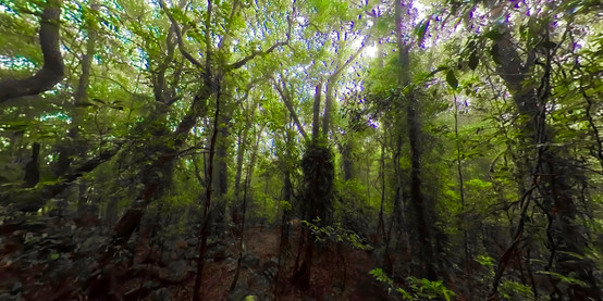 Main Pic Springbrook Rainforest.jpg
