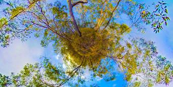 TINY PLANET Springbrook sunset Tree.jpg