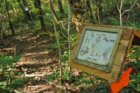 Forest Cube Galerie_34 .JPG