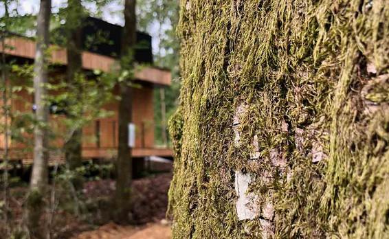 slapen-in-Forest-Cube-Ardennen-Travelvib