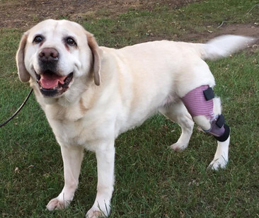 Kadie is happy to show off her ACL brace!