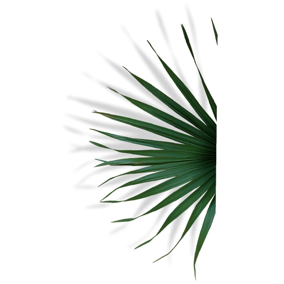 pf logo mockups_2x-8.png