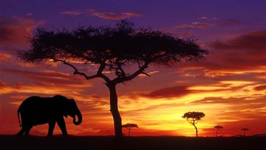 Passion Brand African Sunrise.jpg