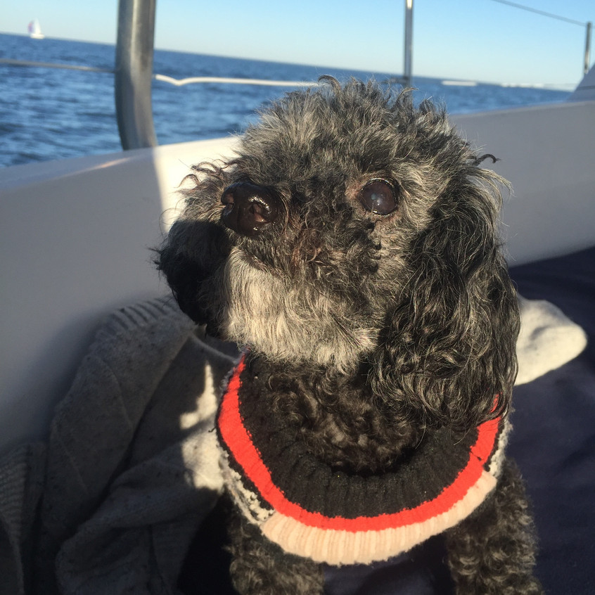 Chasing the wind on the Chesapeake