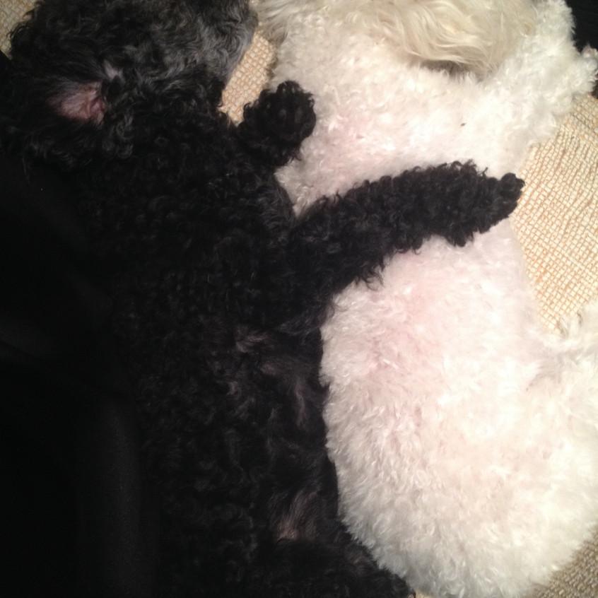 Yin & Yang cousins -Olive and Bianca