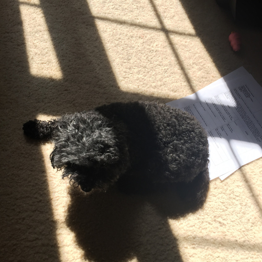 Sun Spot Seeker