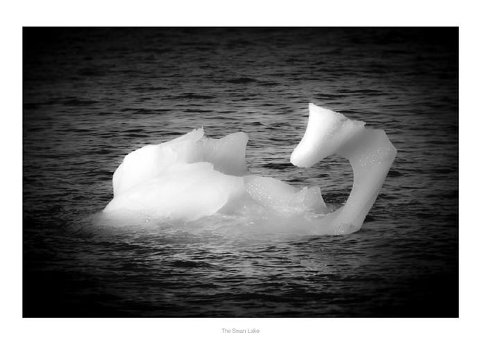 xThe Swan Lake.jpg