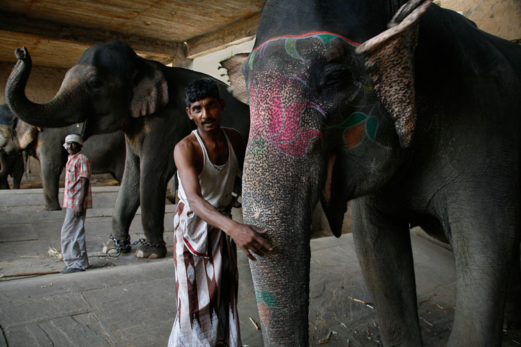 Mahouts with elephants