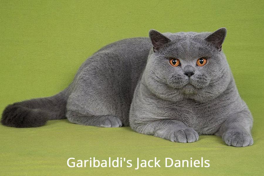 Jack2