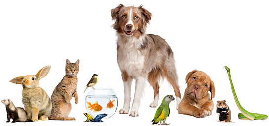 index_dogs_cats_birds_others.jpg