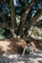 treetoriver26.jpg