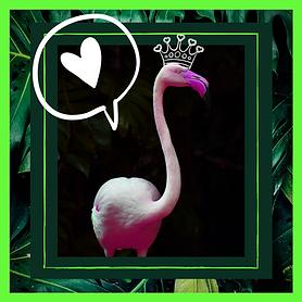 Insta_Flamingo.png