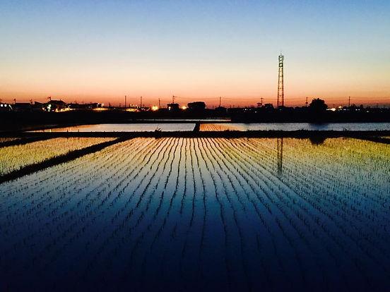 越谷市増林田園風景
