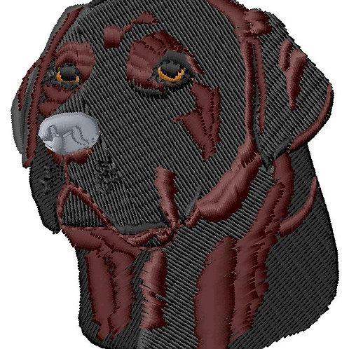 Labrador #37