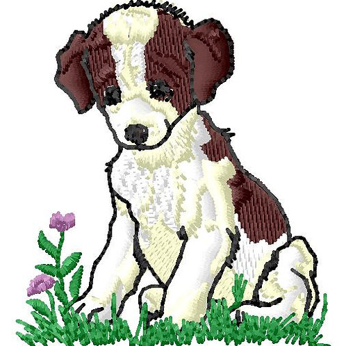 Puppy #33